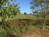 Kijkje over de heg